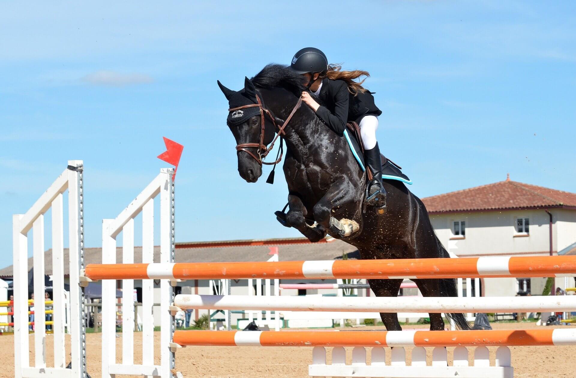 La préparation mentale en équitation